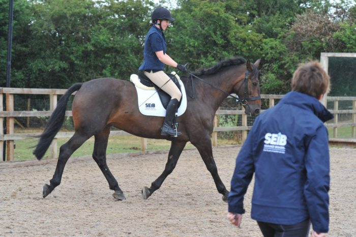 How much do horse riding lessons cost? - SEIB