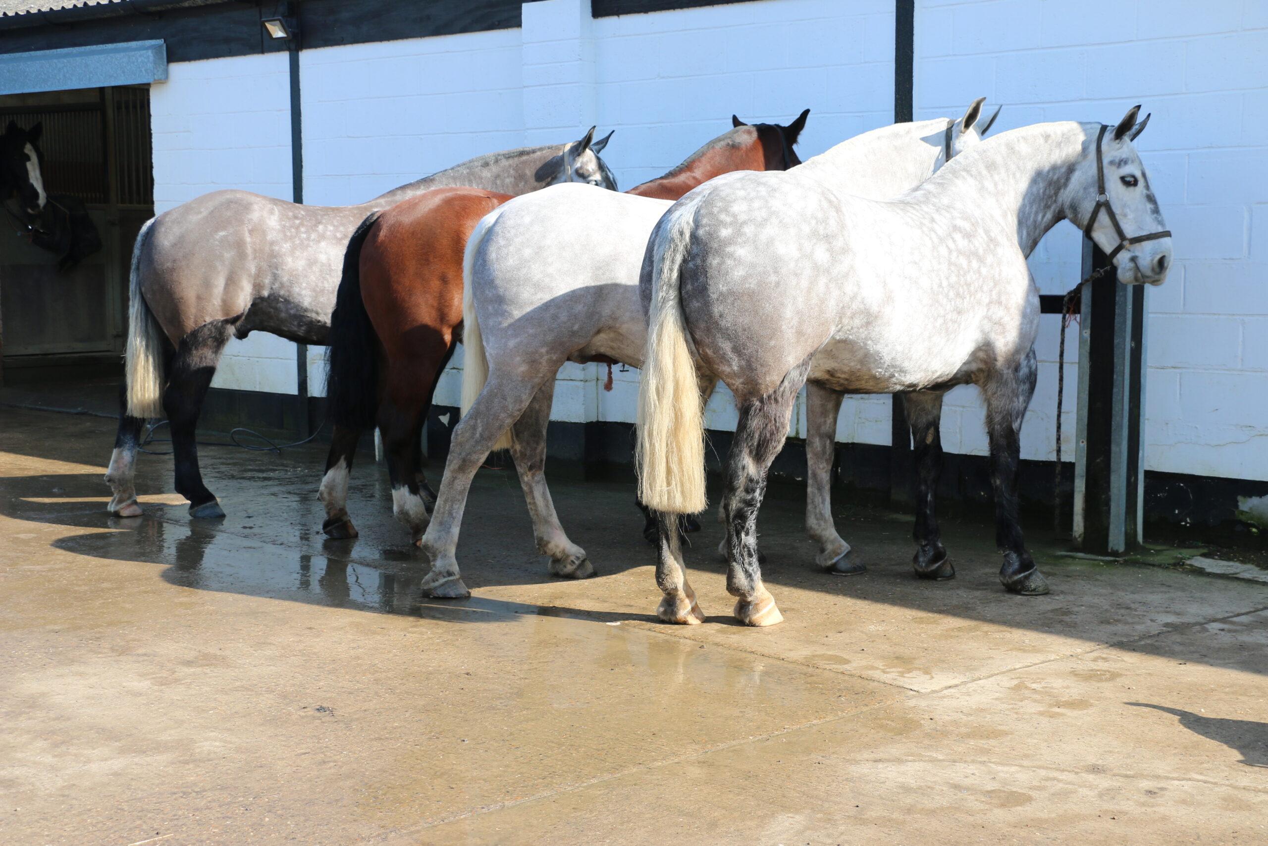 Lynn Russell's Horses